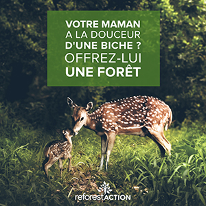 Biche-reforestaction