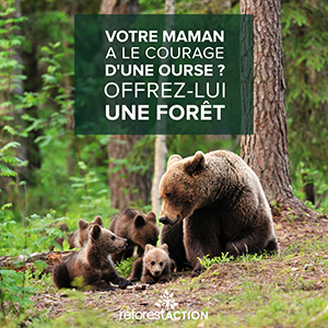 Ours-reforestaction