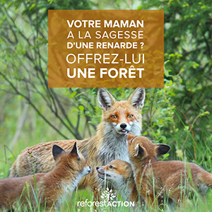 Renard-reforestaction